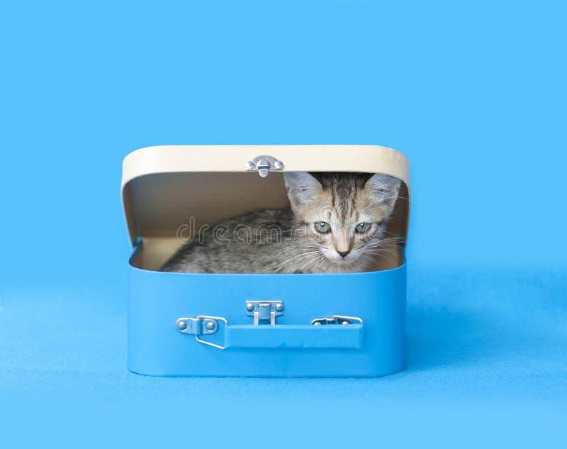 Γατάκι στην μπλε βαλίτσα στοκ φωτογραφία με δικαίωμα ελεύθερης χρήσης