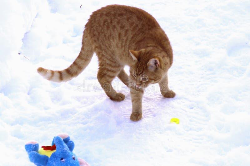 Γατάκι πιπεροριζών που αγωνίζεται με ένα παιχνίδι βελούδου στοκ εικόνες