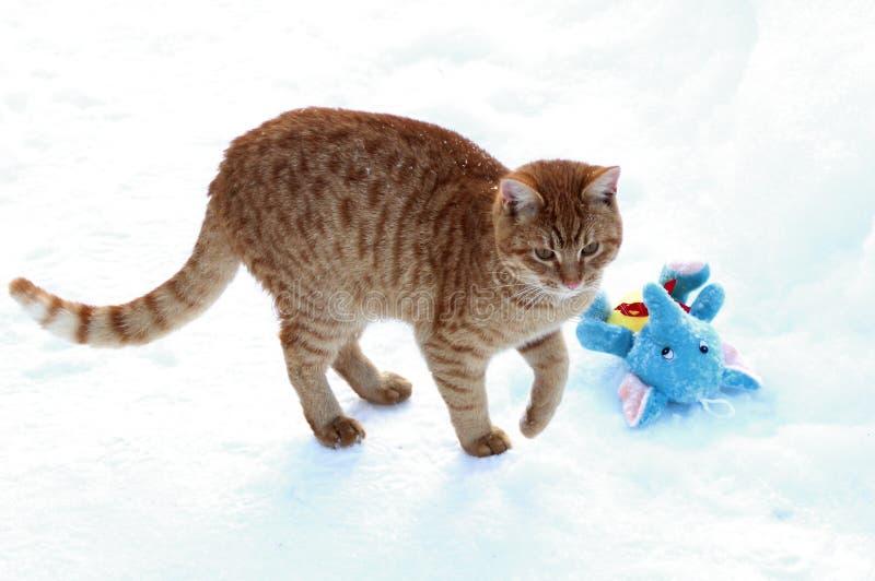 Γατάκι πιπεροριζών που αποσπάται από το παιχνίδι με ένα παιχνίδι βελούδου στοκ εικόνα