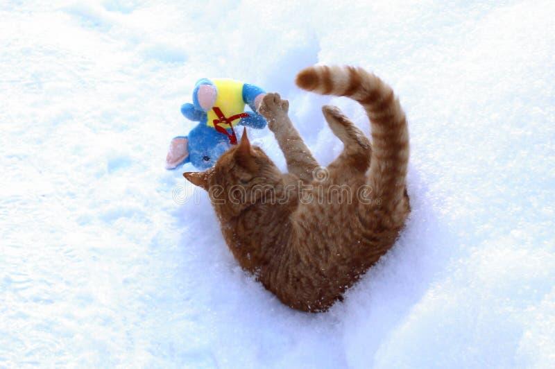 Γατάκι πιπεροριζών που αποσπάται από το παιχνίδι με ένα παιχνίδι βελούδου στοκ φωτογραφία