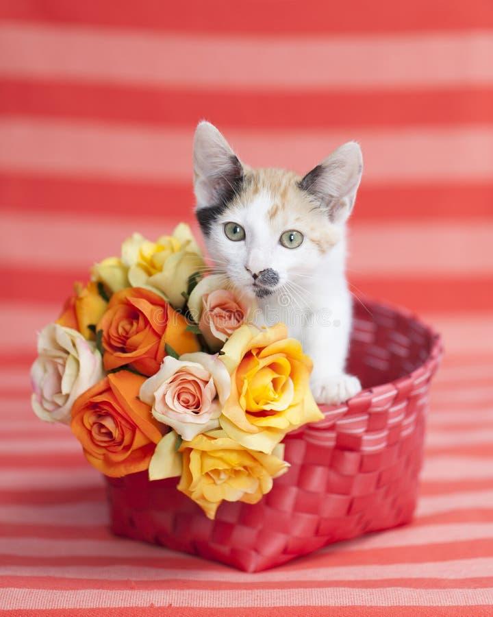 Γατάκι που στέκεται επάνω στο πορτοκαλί καλάθι με τα λουλούδια στοκ φωτογραφία