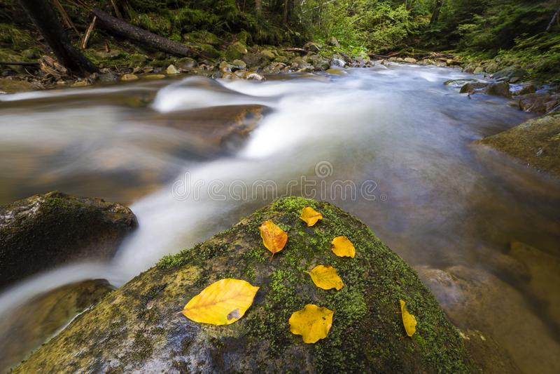 Γρήγορα διατρέχοντας του άγριου πράσινου ρεύματος ποταμών βουνών δασικού με το κρύσταλλο - καθαρίστε το νερό και το φωτεινό κίτρι στοκ εικόνες