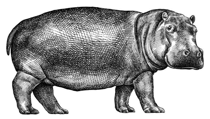 Γραπτός χαράξτε την απομονωμένη απεικόνιση hippo διανυσματική απεικόνιση