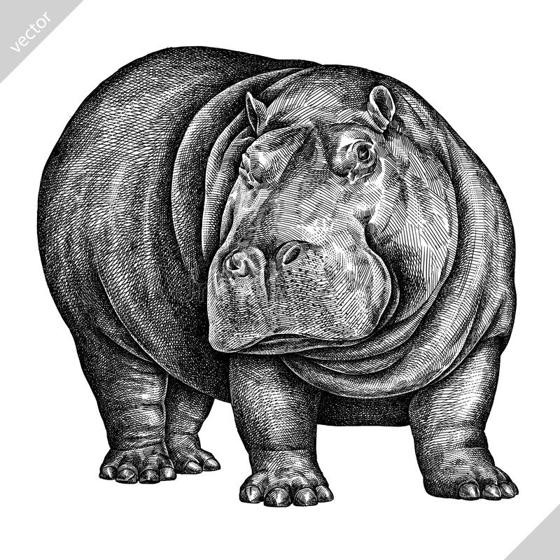 Γραπτός χαράξτε την απομονωμένη διανυσματική απεικόνιση hippo απεικόνιση αποθεμάτων