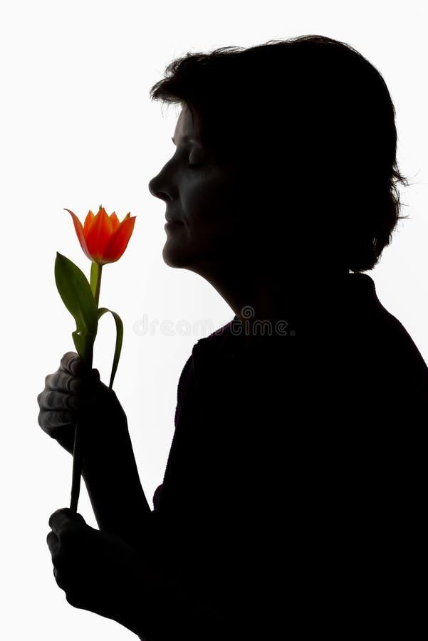 Γυναίκα και τουλίπα σκιαγραφιών στοκ εικόνα