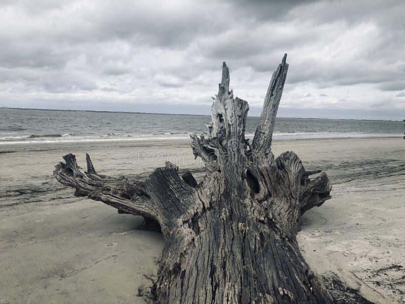 Εγκαταλειμμένη παραλία Driftwood σειράς παραλιών στοκ εικόνες