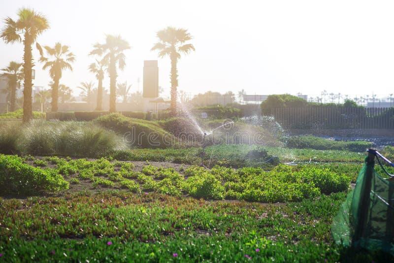 Εγκαταστάσεις ποτίσματος συστημάτων άρδευσης, λουλούδια, σπόρος στην πόλη Cassablanca - Μαρόκο Ο παφλασμός νερού από ψεκάζει το σ στοκ φωτογραφία με δικαίωμα ελεύθερης χρήσης