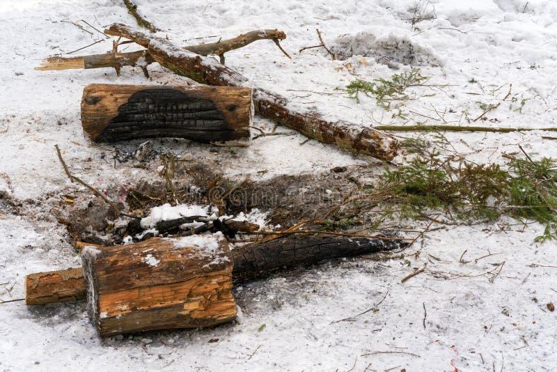 Εκλειψίδα φωτιά στο χειμερινό δάσος στοκ εικόνες με δικαίωμα ελεύθερης χρήσης