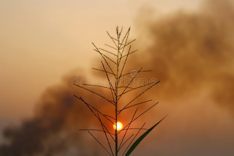 Εκλεκτής ποιότητας ύφος του τομέα χλόης τοπίων φύσης σκιαγραφία στο θερινό ηλιοβασίλεμα στοκ εικόνες