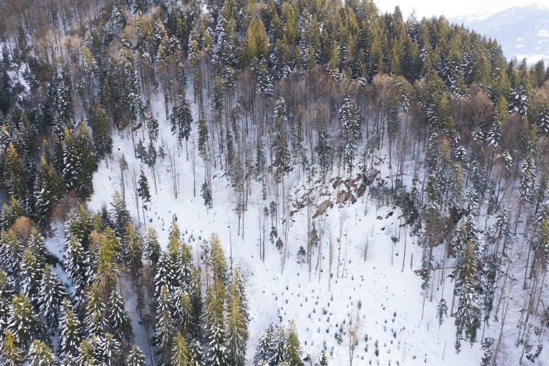 Εναέρια άποψη άποψης κηφήνων χειμερινών της χιονισμένης πεύκων δασικής εναέριας ενός χειμερινού τοπίου στοκ εικόνες