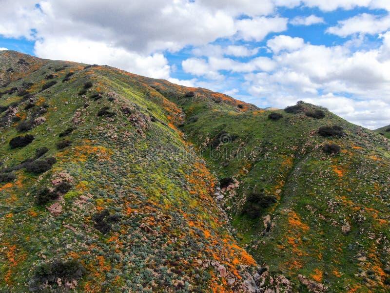 Εναέρια άποψη του βουνού με τη χρυσή παπαρούνα Καλιφόρνιας και Goldfields που ανθίζει στο φαράγγι περιπατητών, λίμνη Elsinore, ασ στοκ εικόνες με δικαίωμα ελεύθερης χρήσης