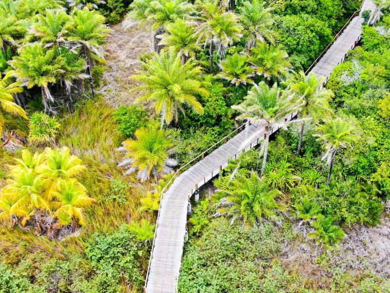 Εναέρια τοπ άποψη της ξύλινης γέφυρας στο βαθύ τροπικό δάσος στοκ εικόνες
