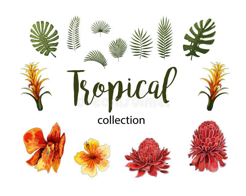 Εξωτικά λουλούδια, τροπικά στοιχεία σχεδίου φύλλων Διανυσματικές floral απεικονίσεις διανυσματική απεικόνιση