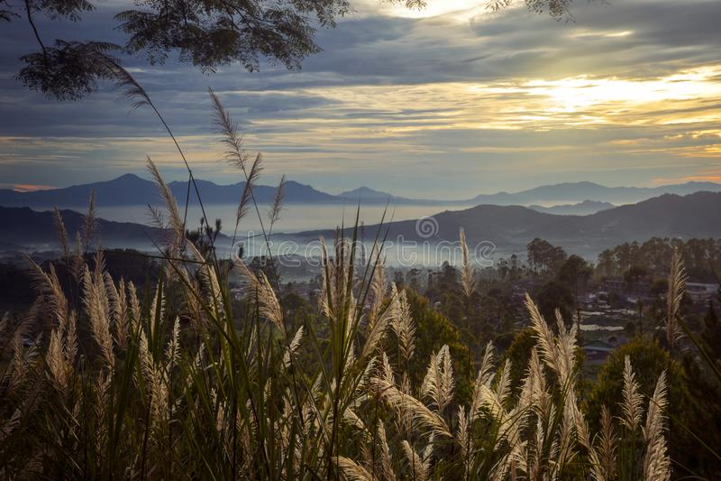 Εξωτική χλόη καλάμων με το misty βουνό στο ηλιοβασίλεμα στοκ φωτογραφία