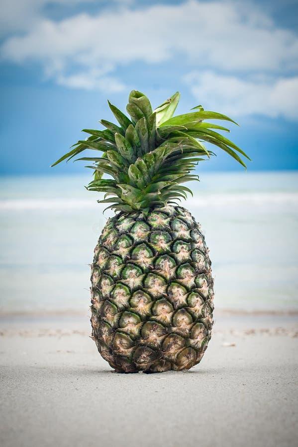 Εξωτικός τροπικός φρέσκος ανανάς Αντανάκλαση νερού στην παραλία στοκ φωτογραφίες με δικαίωμα ελεύθερης χρήσης