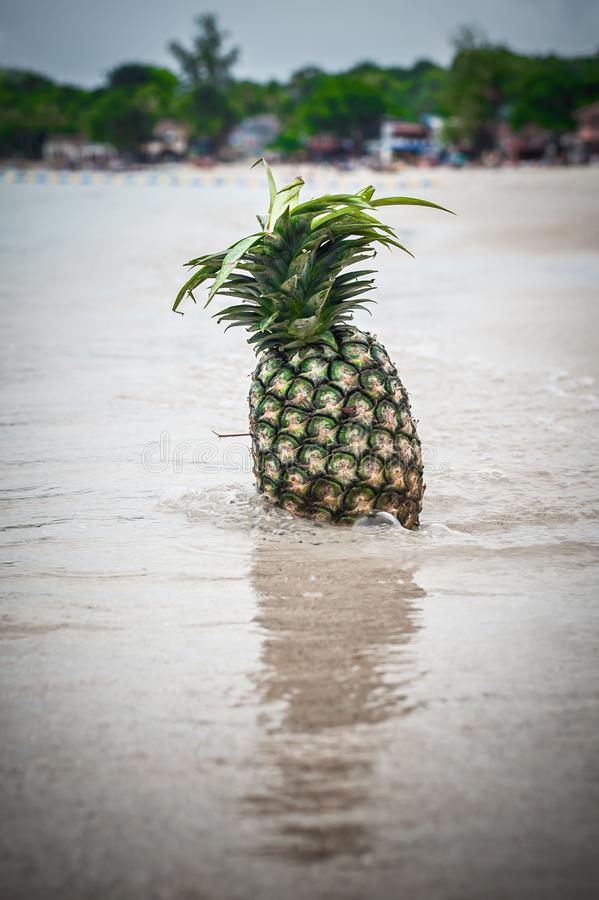 Εξωτικός τροπικός φρέσκος ανανάς Αντανάκλαση νερού στην παραλία στοκ εικόνες