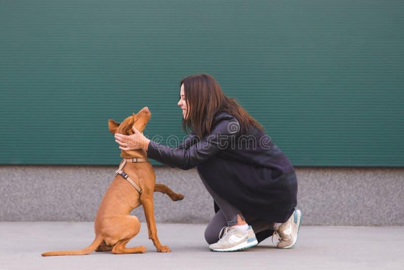 ευτυχής ιδιοκτήτης με ένα σκυλί στο υπόβαθρο του τοίχου παιχνίδι κοριτσιών με ένα σκυλί σε ένα σκοτεινό υπόβαθρο στοκ φωτογραφίες με δικαίωμα ελεύθερης χρήσης