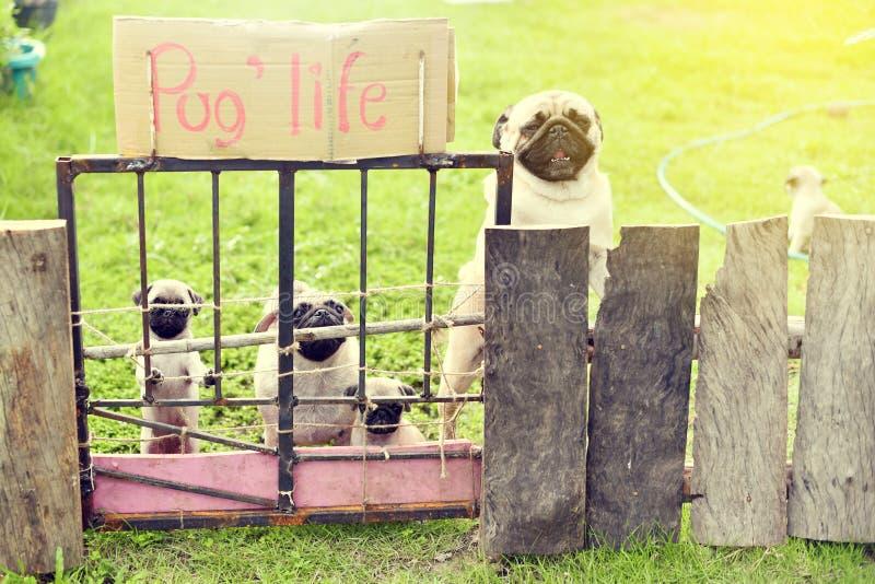 Ευτυχής οικογένεια μαλαγμένου πηλού στον κήπο στοκ φωτογραφία με δικαίωμα ελεύθερης χρήσης