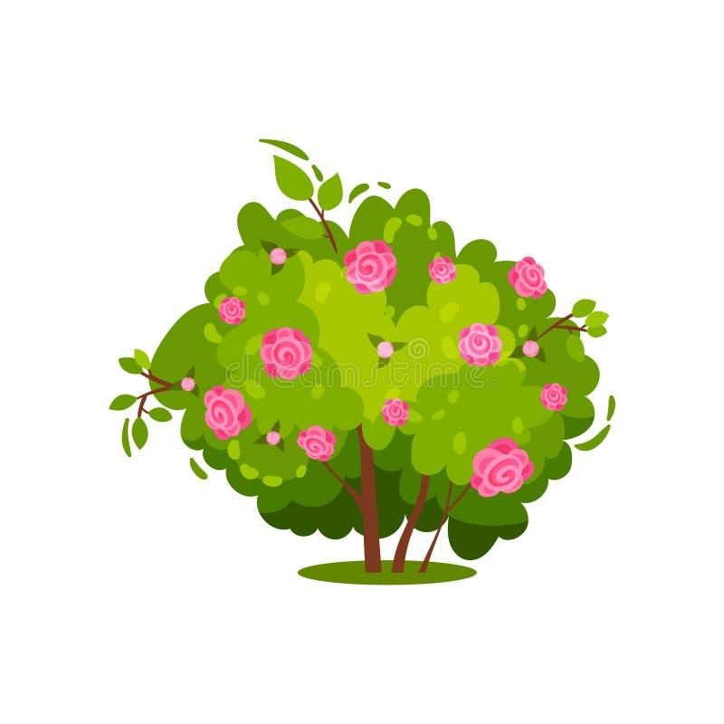 Επίπεδο διανυσματικό εικονίδιο του πράσινου θάμνου με τα ευγενή ρόδινα τριαντάφυλλα όμορφος κήπος λουλουδιών Θέμα φύσης Στοιχείο  διανυσματική απεικόνιση