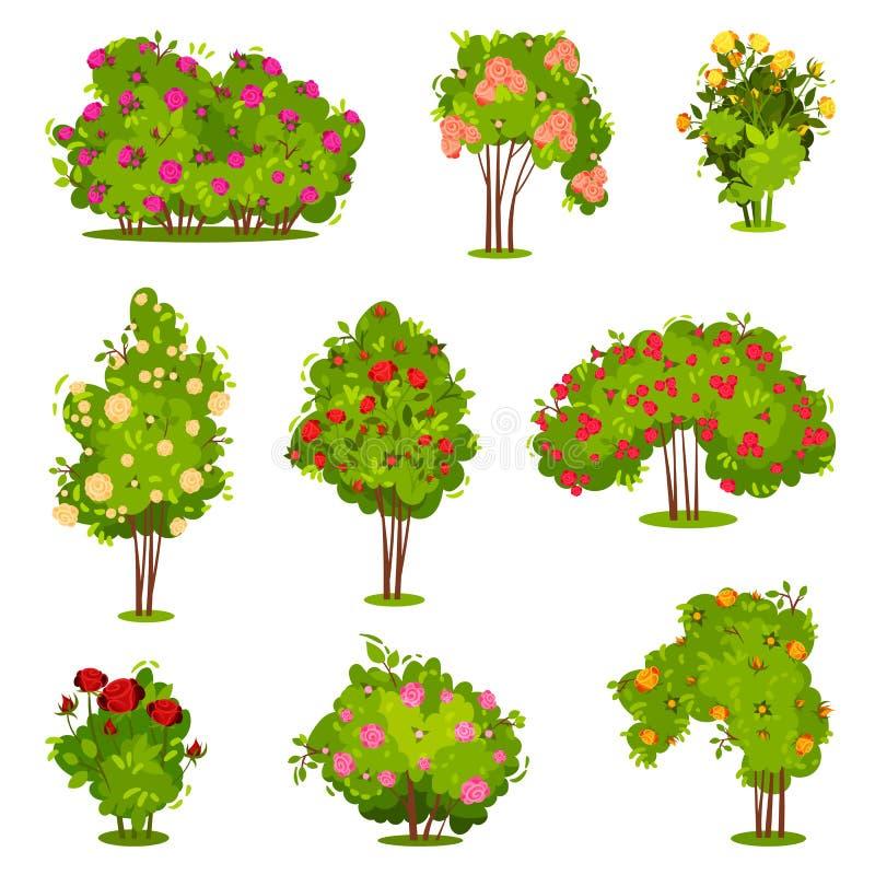 Επίπεδο διανυσματικό σύνολο θάμνων τριαντάφυλλων Πράσινοι θάμνοι με τα όμορφα λουλούδια Εγκαταστάσεις κήπων Φυσικά στοιχεία τοπίω απεικόνιση αποθεμάτων