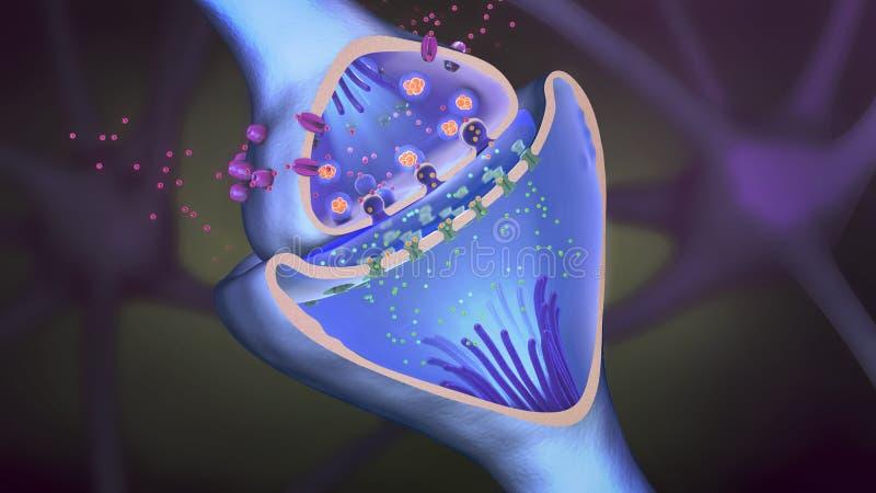 Επιστημονική λειτουργία μιας σύναψης ή νευρωνική σύνδεση με ένα κύτταρο νεύρων απεικόνιση αποθεμάτων