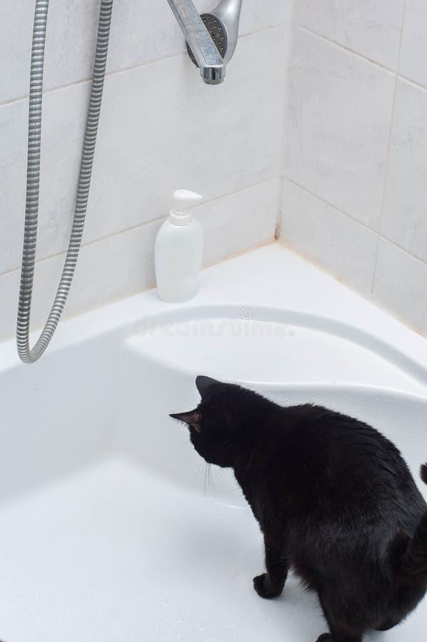 Ζωή των γατών και των ανθρώπων στοκ εικόνες με δικαίωμα ελεύθερης χρήσης