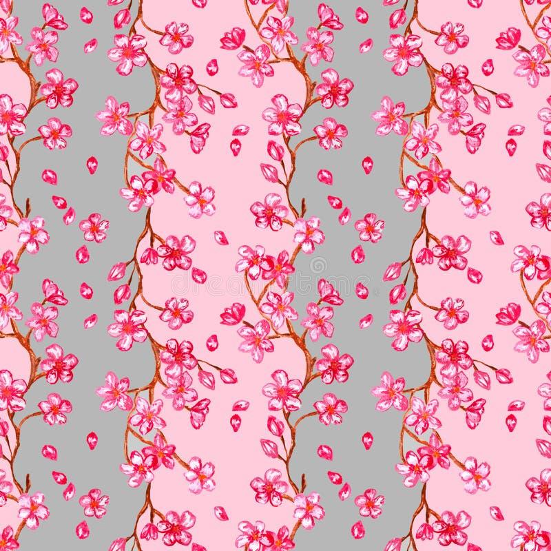 Ζωγραφική watercolor ανθών κερασιών στο ροζ με γκρίζο - το άνευ ραφής σχέδιο με το sakura ανθίζει απεικόνιση αποθεμάτων