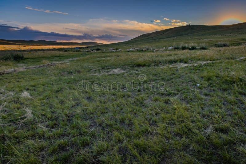 Ζωηρόχρωμο ηλιοβασίλεμα με τη σκοτεινή χλόη στο πρώτο πλάνο και τα πρόβατα μπροστά από τους κυλώντας πράσινους λόφους στην εσωτερ στοκ φωτογραφία