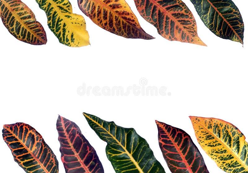 Ζωηρόχρωμο φύλλο σχεδίων τροπικό στοκ φωτογραφίες