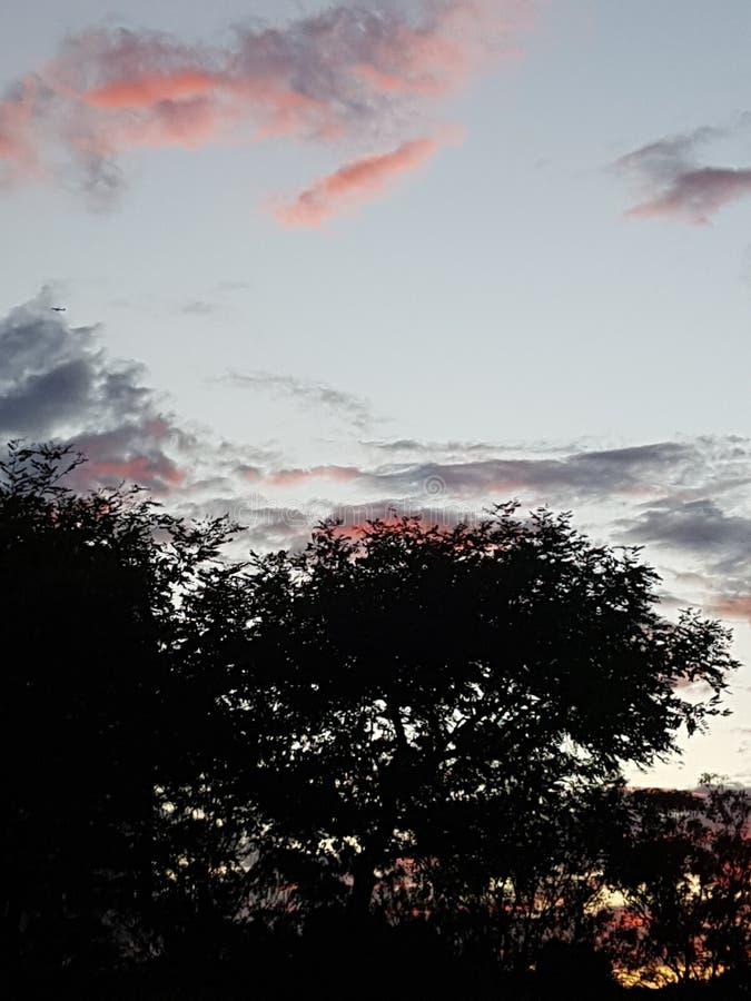 Ηλιοβασίλεμα με ένα δέντρο και έναν μαγικό ουρανό στοκ εικόνα με δικαίωμα ελεύθερης χρήσης