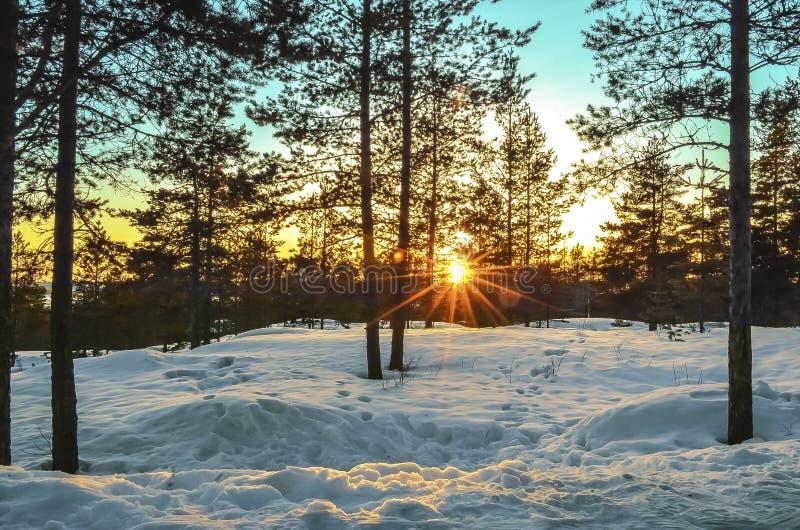 Ηλιοβασίλεμα στον ορίζοντα μέσω των ξύλων στοκ εικόνες