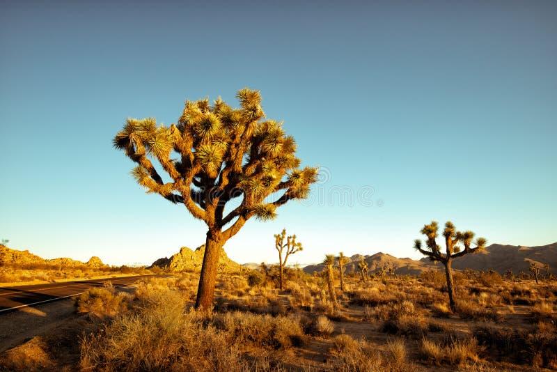 Ηλιοβασίλεμα στο εθνικό πάρκο δέντρων του Joshua στοκ εικόνες με δικαίωμα ελεύθερης χρήσης