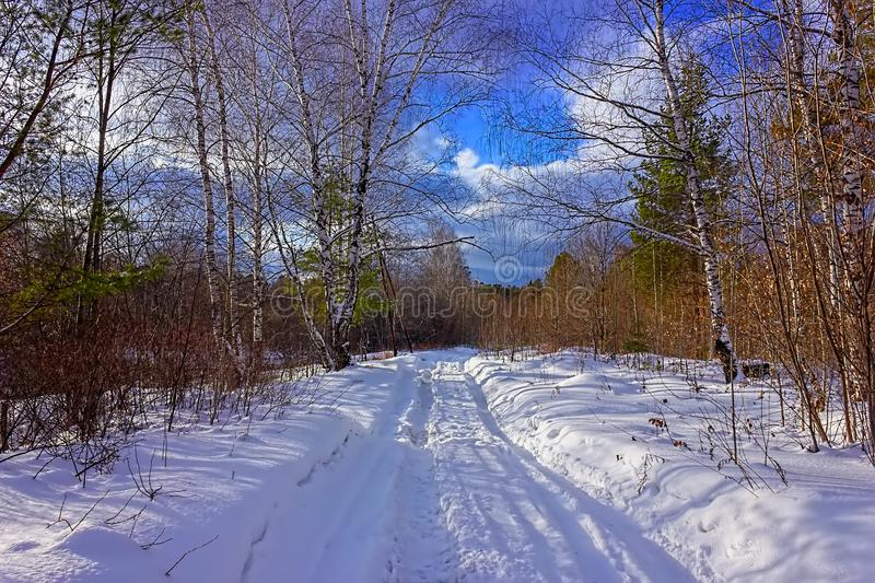 ηλιόλουστη ημέρα στη χιονώδη χειμερινή δασική φωτογραφία διπλός-ISO στοκ φωτογραφία
