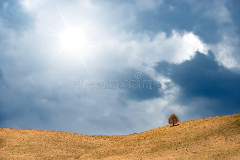 Ηλιόλουστη ημέρα το φθινόπωρο με το λόφο που καλύπτεται από την ξηρά χλόη και το δέντρο Ειδυλλιακή άποψη τοπίων επαρχίας, μόνο δέ στοκ φωτογραφίες με δικαίωμα ελεύθερης χρήσης