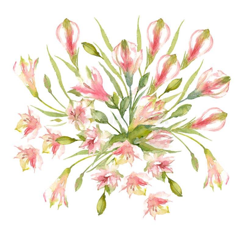 Η ανθοδέσμη της ποικιλίας Alstroemeria ανθίζει, οφθαλμοί και βολβοί σε ένα άσπρο υπόβαθρο Ρόδινος περουβιανός κρίνος η διακοσμητι απεικόνιση αποθεμάτων