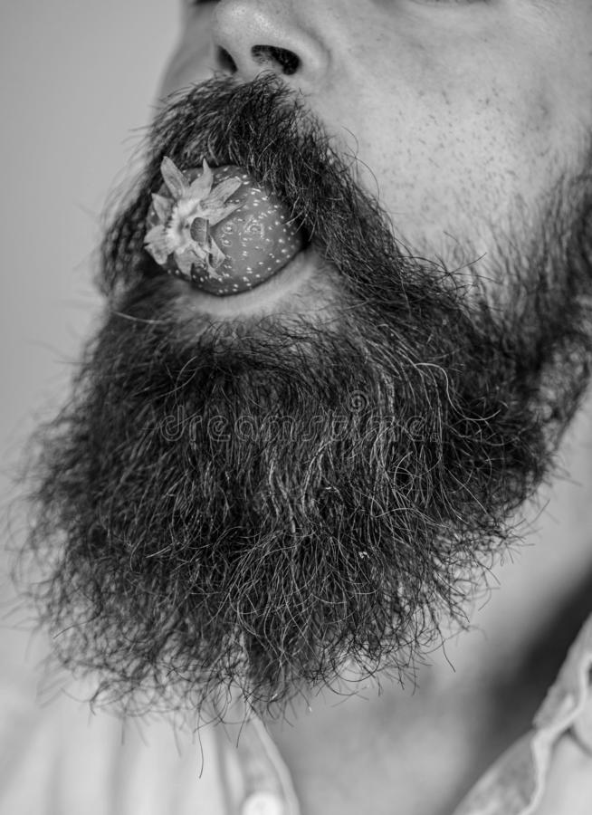 Η αρσενική γενειάδα προσώπου δοκιμάζει τη φράουλα Αρσενική στόμα γενειάδα μούρων mustache Γαστρονομική ευχαρίστηση Το άτομο τρώει στοκ εικόνα
