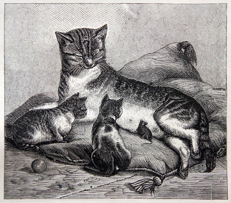 Η γάτα έχει γίνει μητέρα για ένα ποντίκι στοκ εικόνες