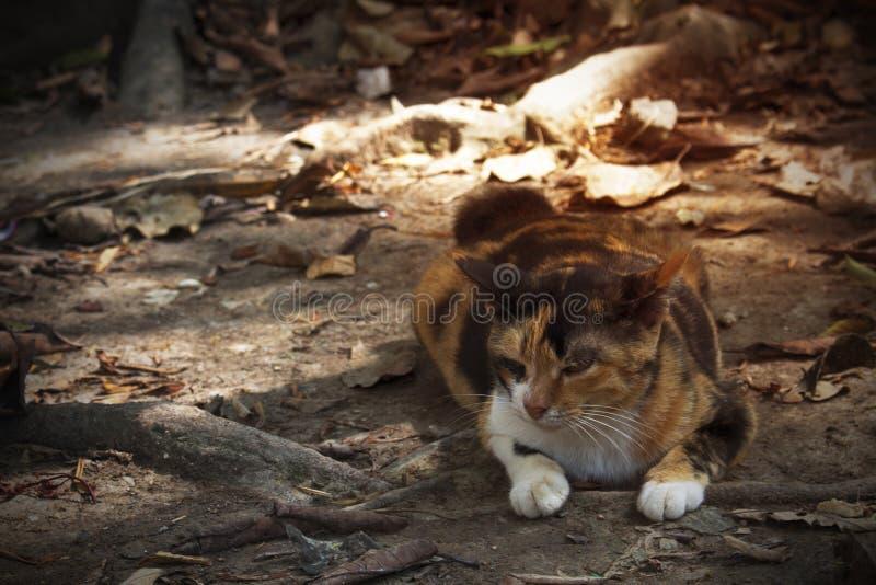 Η γάτα τρεις-χρώματος που βρίσκεται στο έδαφος στοκ φωτογραφία