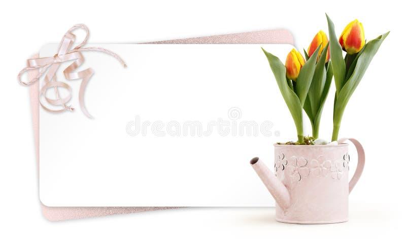 Η κάρτα δώρων και οι εγκαταστάσεις λουλουδιών τουλιπών στο ρόδινο πότισμα μετάλλων δοχείων μπορούν με τη ρόδινη κορδέλλα που απομ στοκ εικόνες με δικαίωμα ελεύθερης χρήσης