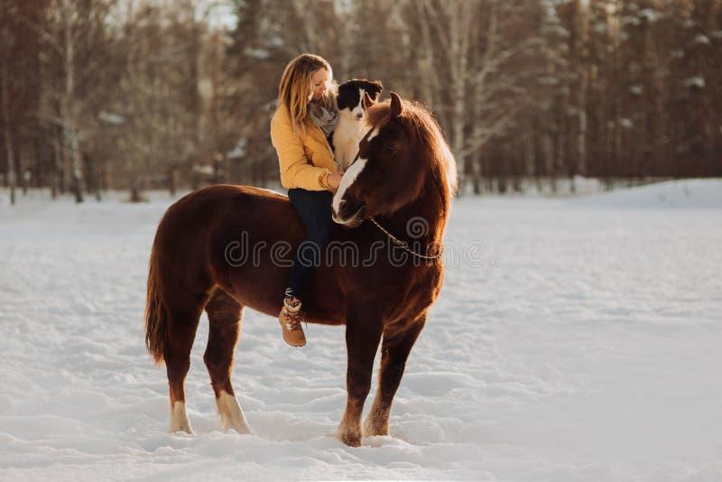 Η νέα ευτυχής χαριτωμένη χαμογελώντας γυναίκα με το κόλλεϊ συνόρων σκυλιών της κάθεται στο άλογο στον τομέα χιονιού στο ηλιοβασίλ στοκ φωτογραφία με δικαίωμα ελεύθερης χρήσης