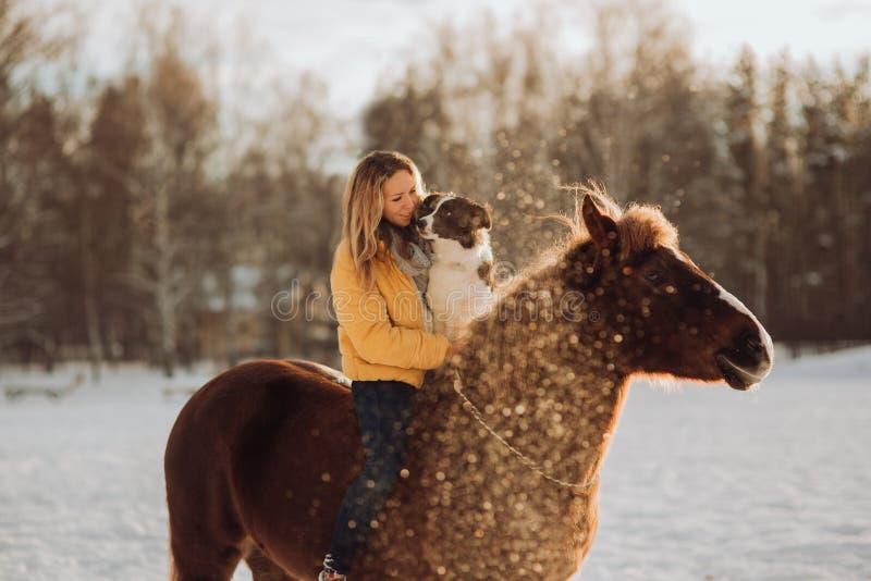 Η νέα ευτυχής χαριτωμένη χαμογελώντας γυναίκα με το κόλλεϊ συνόρων σκυλιών της κάθεται στο άλογο στον τομέα χιονιού στο ηλιοβασίλ στοκ εικόνα