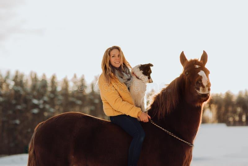 Η νέα ευτυχής χαριτωμένη χαμογελώντας γυναίκα με το κόλλεϊ συνόρων σκυλιών της κάθεται στο άλογο στον τομέα χιονιού στο ηλιοβασίλ στοκ εικόνες