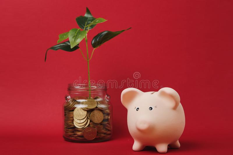 Η ρόδινη piggy τράπεζα χρημάτων, χρυσά νομίσματα σωρών στο βάζο γυαλιού με τις πράσινες εγκαταστάσεις βλαστάνει στο κόκκινο υπόβα στοκ εικόνες