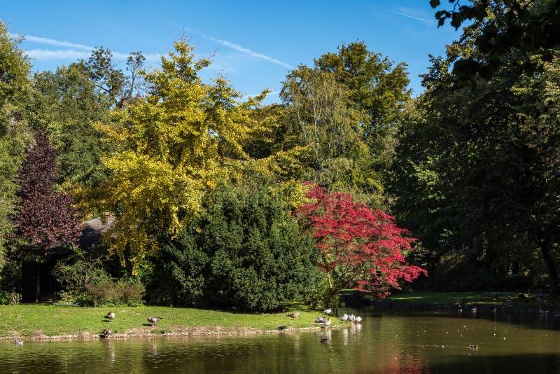 Η φραγμός-διευθυνμένη χήνα, indicus Anser που βλέπει στον αγγλικό κήπο στο Μόναχο στοκ φωτογραφία με δικαίωμα ελεύθερης χρήσης