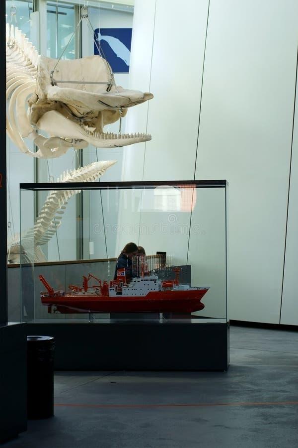 Θαλάσσιο μουσείο προθηκών έκθεσης στοκ φωτογραφίες