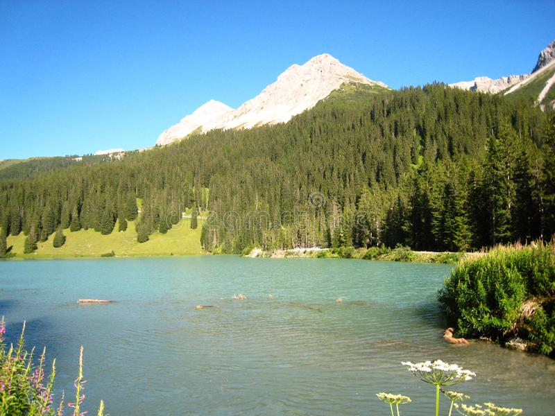 Θαυμάσια άποψη πέρα από μια μπλε ελβετική λίμνη με τα χιονισμένα βουνά και τα λουλούδια στοκ φωτογραφία με δικαίωμα ελεύθερης χρήσης