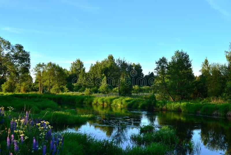 Θερινό τοπίο σε έναν μυθικό μικρό ποταμό μέσα σε ένα δάσος αγριοτήτων ενάντια στο ηλιοβασίλεμα βραδιού στοκ φωτογραφίες