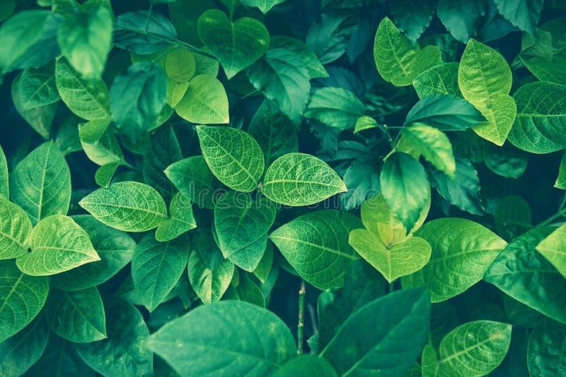 Θερινό υπόβαθρο φύλλων ζουγκλών πράσινο στους εξωτικούς τόνους στοκ φωτογραφίες με δικαίωμα ελεύθερης χρήσης