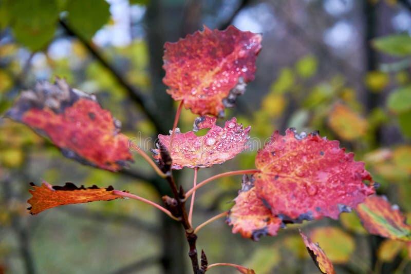Θερμό ελαφρύ φωτεινό φθινόπωρο στοκ εικόνες