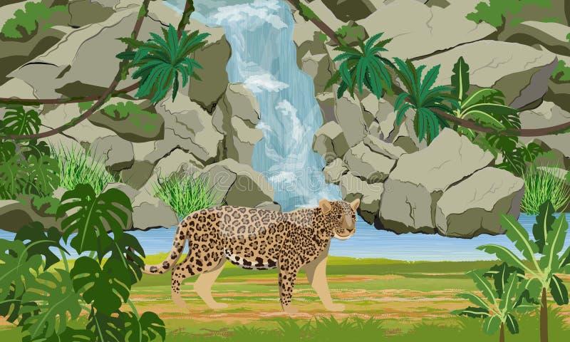 Ιαγουάρος κοντά στον τροπικό καταρράκτη και τη μεγάλη λίμνη Ιαγουάρος στη ζούγκλα απεικόνιση αποθεμάτων